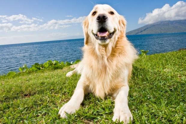 cachorro que come grama