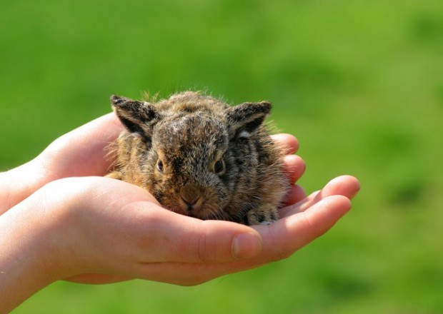 cuidar de coelho