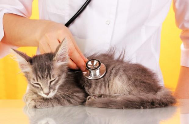 exame em gato