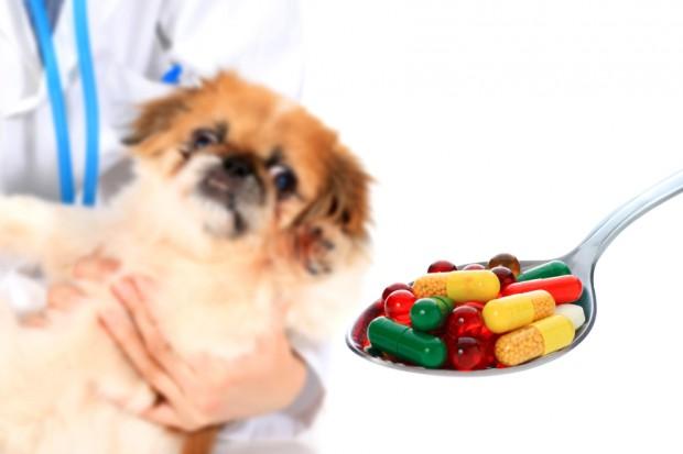 remédio para cão